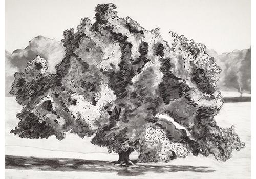 Tree by Jon Bird. wf IMG_0573
